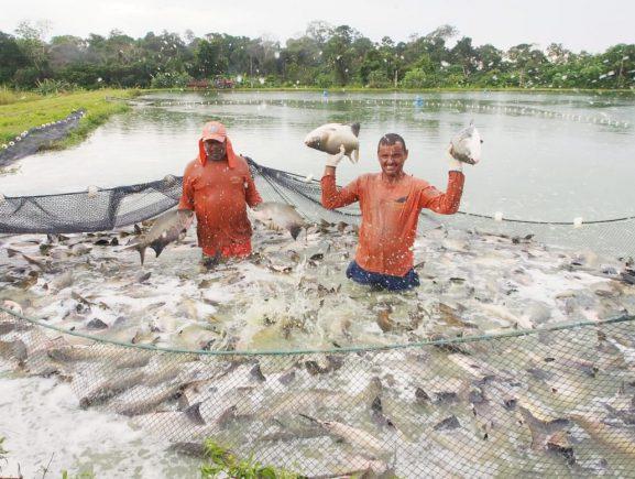 Sistema Sepror realiza despesca de 16 toneladas de peixe para serem doadas a entidades beneficentes
