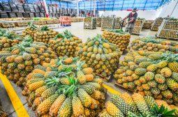 Governo do Amazonas compra mais 76 toneladas de produtos da agricultura familiar